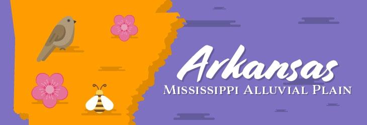 Mississippi Alluvial Plain Region